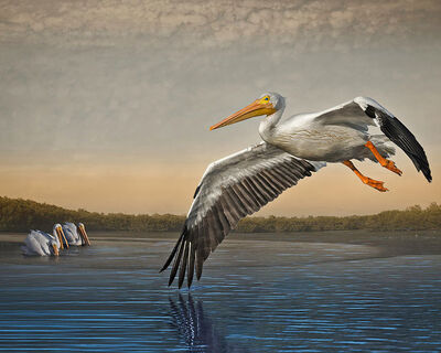 Cheryl Medow, 'White Pelicans at Dawn', 2016