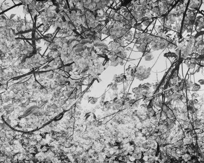 Mirjam Abraas, 'Fragile Clouds', 2019