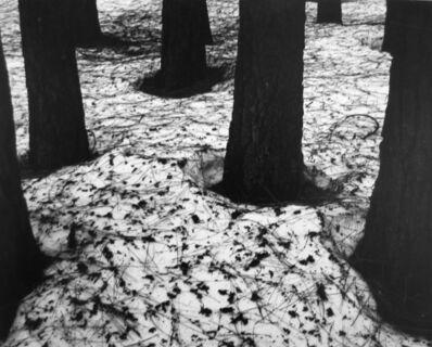 Brett Weston, 'Pines in Snow, Yosemite', 1950