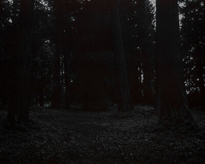 Chris Bennett, 'From the series Darkwood, #25', 2014