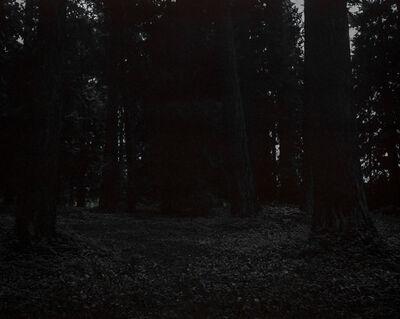 Chris Bennett, 'From the series Darkwood, #25', 2014