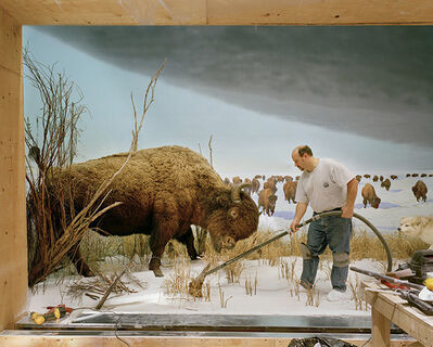Richard Barnes, 'Man with Buffalo from Animal Logic', ca. 2005