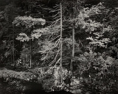 Ansel Adams, 'Forest and Stream, Northern California', 1959