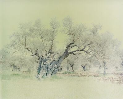 Ori Gersht, 'Olive 15', 2004