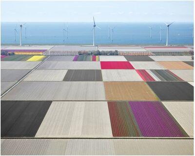 David Burdeny, 'Tulips and Turbines 01, Noordoostpolder, Netherlands', 2016