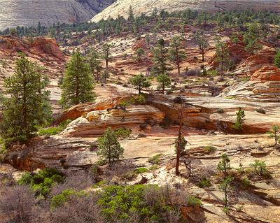 Christopher Burkett, 'Pine Forest, Sandstone and Light, Utah', n.d.