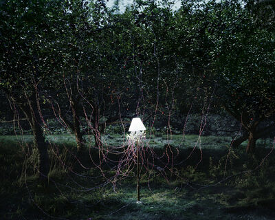 Caleb Charland, 'Apple Trees and LED's', 2011