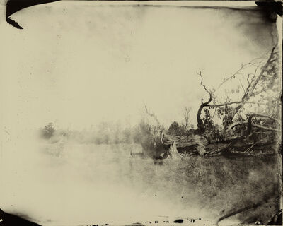 Sally Mann, 'Deep South, Untitled (Fallen Tree)', 1998