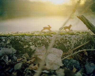 Susan Arthur Whitson, 'Rabbit Chasing Fox', 2006