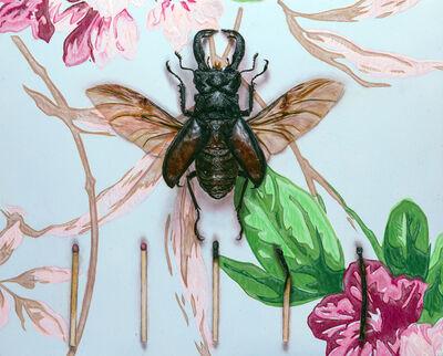 Matthew Cook, 'The King Beetle', 2019
