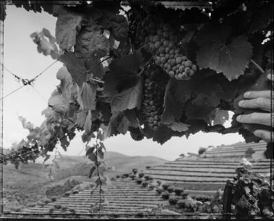 Mark Klett, 'Looking at terraces above the Duoro, Above Piñao, 1995', 1995