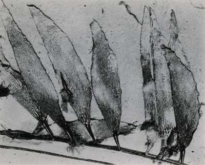 Edward Weston, 'Leaf Abstraction', 1948