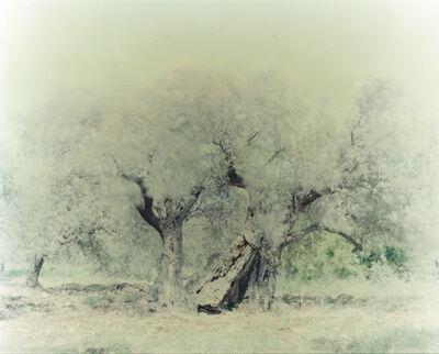 Ori Gersht, 'Olive 14', 2004