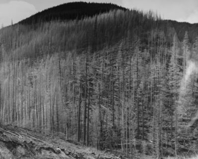 Frank Gohlke, 'Downed, standing dead, and living trees at the Northeastern limit of eruption impact zone, 13.5 miles NE of Mt. St. Helens, Wash. ', 1983