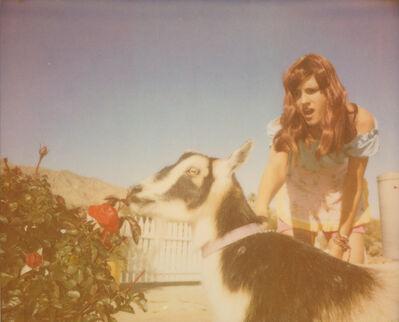 Stefanie Schneider, 'Heather and Zeuss (The Girl behind the White Picket Fence) ', 2013