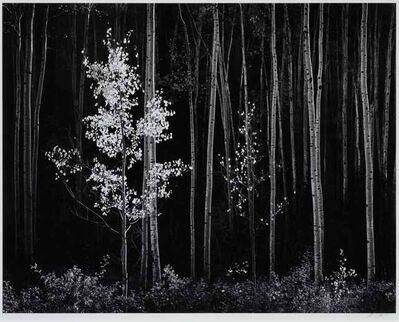 Edward Weston, 'Untitled'