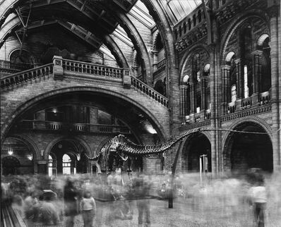Matthew Pillsbury, 'Wyoming Diplodocus, Natural History Museum, London', 2007