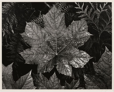 Ansel Adams, 'Leaves, Glacier NP', ca. 1942