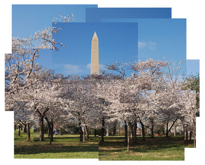 Jason Horowitz, 'Cherry Blossoms, Washington, DC', 2004