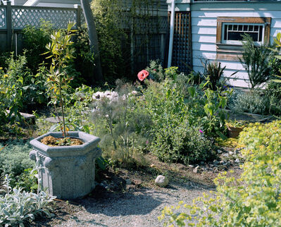 Jeff Wall, 'Poppies in a Garden', 2006
