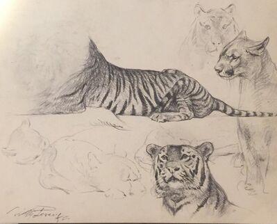 Wilhelm Lorenz, 'Study of tiger and lioness', 1958