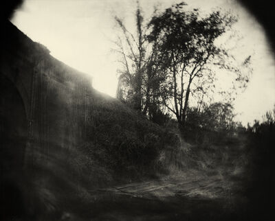 Sally Mann, 'Georgia Untitled (Vines)', 1996