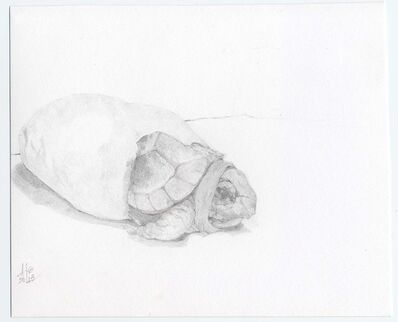 Heather Lancaster, 'Hatching Box Turtle', 2015