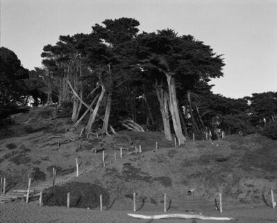 Christine Huhn, 'Trees at Baker Beach, California ', 2020