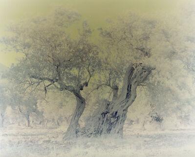 Ori Gersht, 'Olive 5', 2003