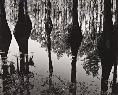 Brett Weston, 'Cypress Trees and Swamp, North Carolina', 1947