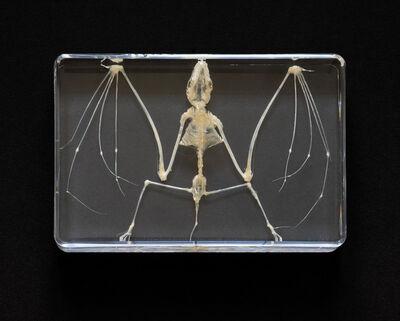 Anett Stuth, 'Badman/Little Ghost – Bat Skeleton', 2021