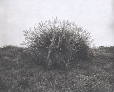 Koichiro Kurita, 'A Bunch of Japanese Grass', 1988