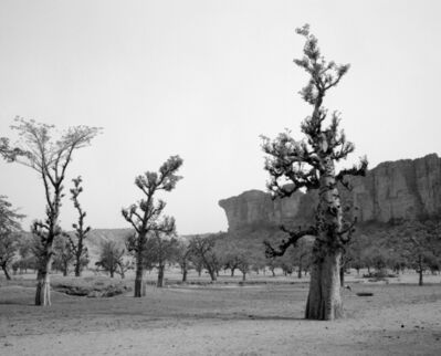 Ian van Coller, 'Baobab with Dogon Cliffs', 1998