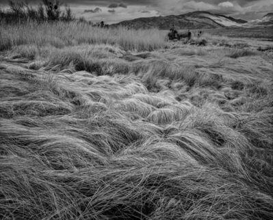 Gary Faye, 'Tall Grasses', 1980