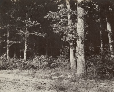 Charles Marville, 'Trees', 1851
