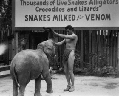 Bruce Mozert, 'Johnny Weissmuller as Tarzan', 1940-1970