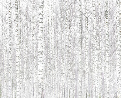 Andreas Gefeller, '010, Birch Forest', 2017