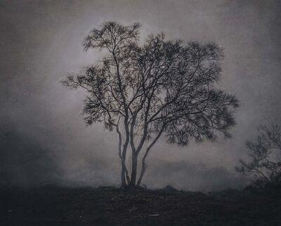 Kate Breakey, 'Tree in the Mist, Mt. Etna, Sicily, Italy'