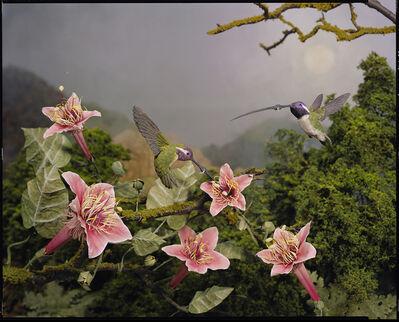 Lori Nix and Kathleen Gerber, 'Humming Birds', 2009