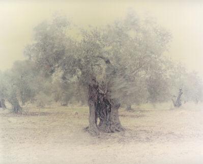 Ori Gersht, 'Olive 2', 2003