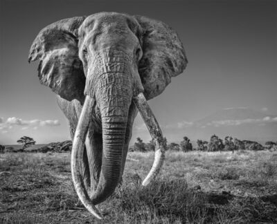 David Yarrow, 'Space for Giants', 2020