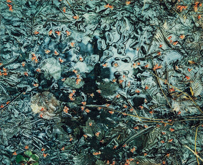 Eliot Porter, 'Portfolio One: The Seasons (five of the original twelve photographs)', 1963