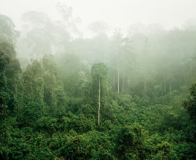 Olaf Otto Becker, 'Primary Forest 03, Malaysia 10/2012', 2012