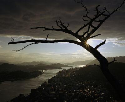 Wim Wenders, 'The Dead Tree', 2005