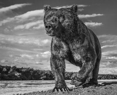 David Yarrow, 'Fisher King ', 2017