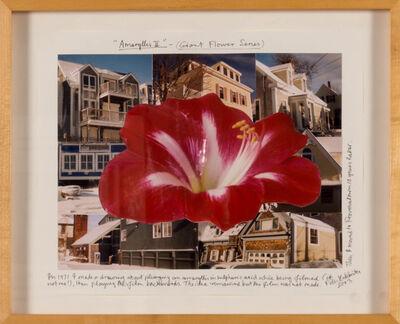 Peter Arthur Hutchinson, 'Amaryllis II (Giant Flower Series)', 2003