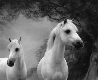 Sheila Rock, 'Horse #58'
