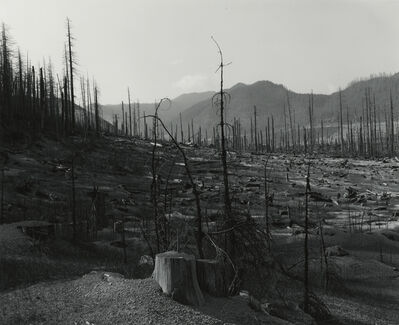 Frank Gohlke, 'Old Clearcut in Clearwater Creek Valley', 1981