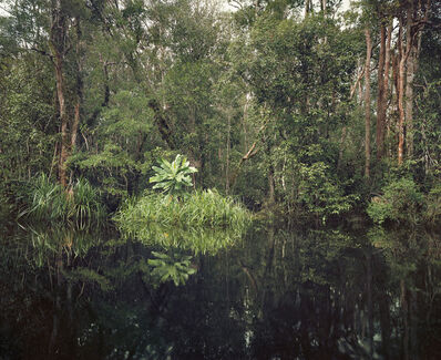 Olaf Otto Becker, 'Primary swamp forest 01, black water, Kalimantan, Indonesia', 03/2012