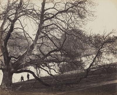 Francis Bedford, 'Chestnut Tree in Warwick Park, England', ca. 1865